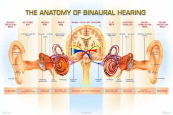 binaural_hearing_ear